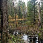 Upjohn Nature Reserve - Muskoka Conservancy